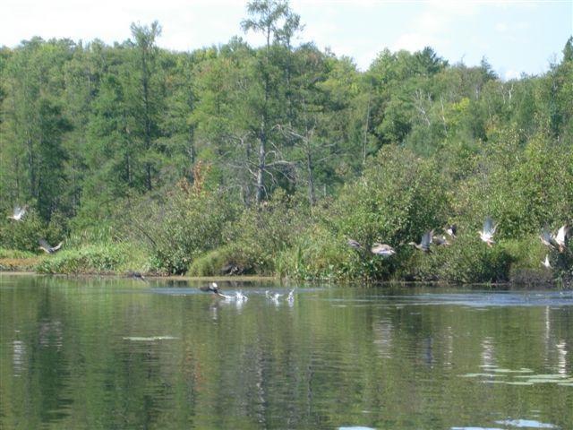 Lot 1 Bo Di Lac Rd, Lac Du Flambeau, WI 54538 (#1851926) :: HomeTeam4u