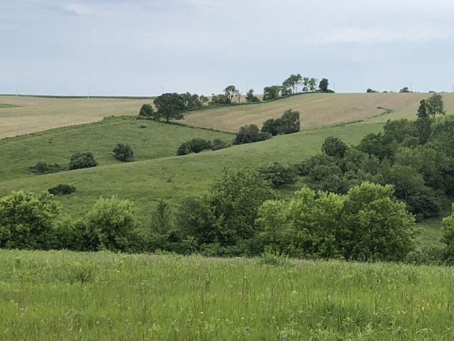 35 Ac Weidenfeller Rd, Mineral Point, WI 53565 (#1860251) :: Nicole Charles & Associates, Inc.