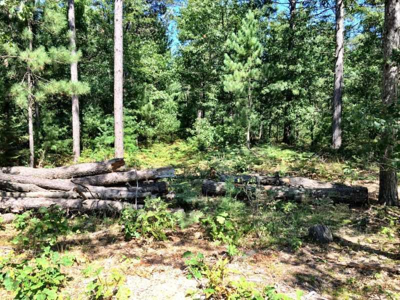 10138 Point O Pines Rd - Photo 1