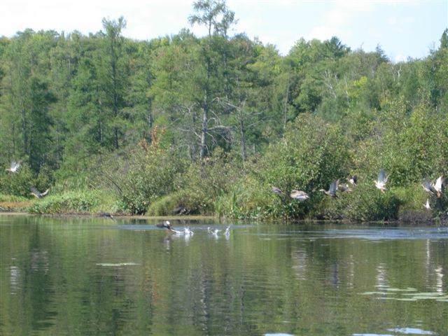 Bo Di Lac Rd, Lac Du Flambeau, WI 54538 (#1874717) :: HomeTeam4u