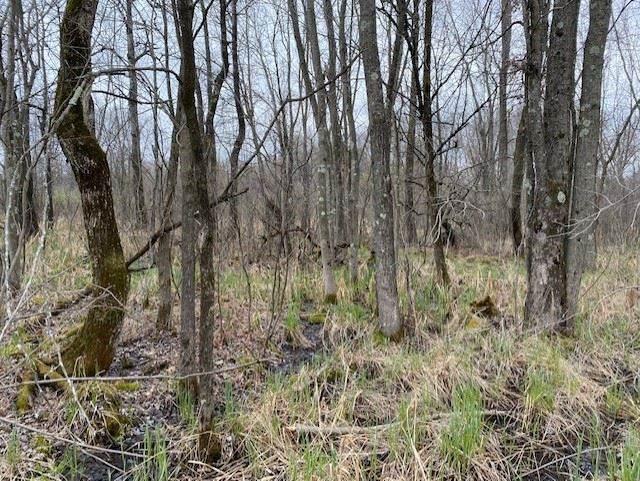 40 acres Dragonfly Rd, Byron, WI 54666 (#1906906) :: Nicole Charles & Associates, Inc.