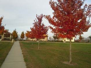 2112 Fieldstone Blvd, Prairie Du Sac, WI 53578 (#1907290) :: RE/MAX Shine