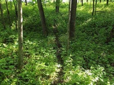 L57 Deep Woods Ln, Bloomington, WI 53801 (#1910509) :: RE/MAX Shine
