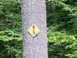 LOT 1 Beaver Brook Estates - Photo 21