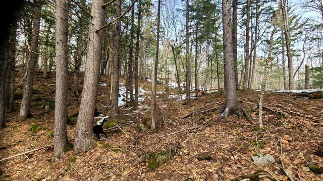 Lot 9 Winter Road, Linneus, ME 04730 (MLS #1488220) :: Keller Williams Realty