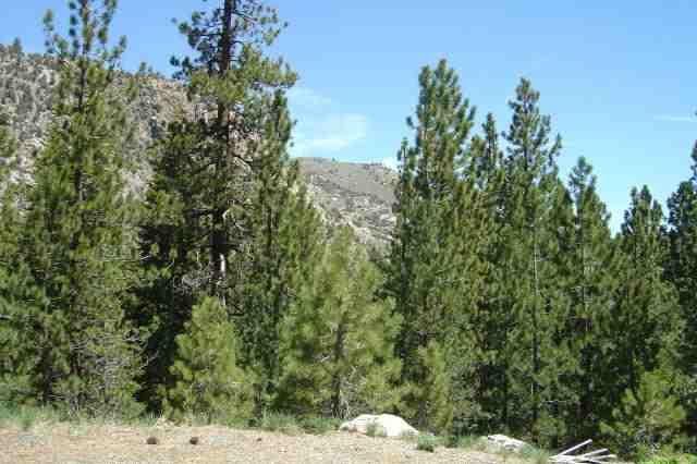 00 Piute Drive, June Lake, CA 93529 (MLS #105029) :: Rebecca Garrett - Mammoth Realty Group