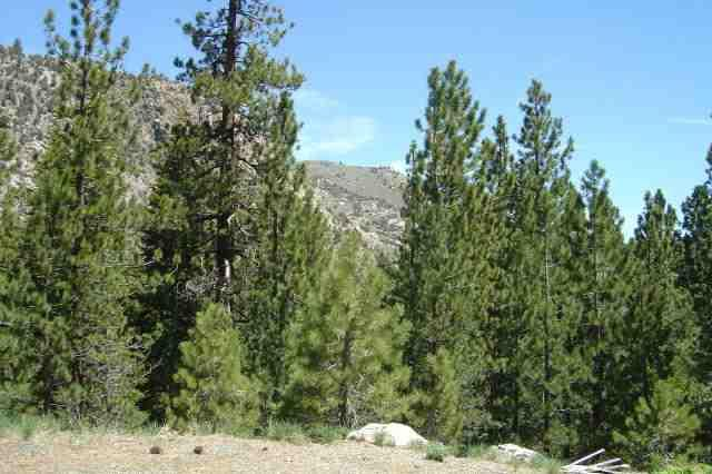 00 Piute Drive, June Lake, CA 93529 (MLS #190177) :: Mammoth Realty Group