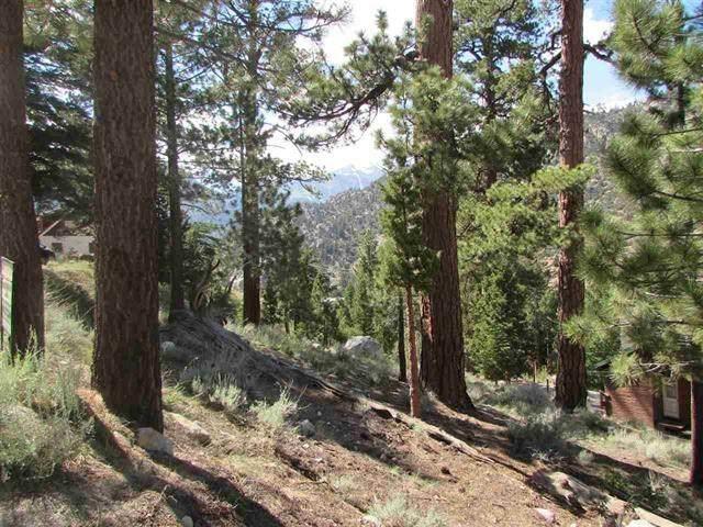 638 Piute Drive, June Lake, CA 93529 (MLS #210005) :: Mammoth Realty Group