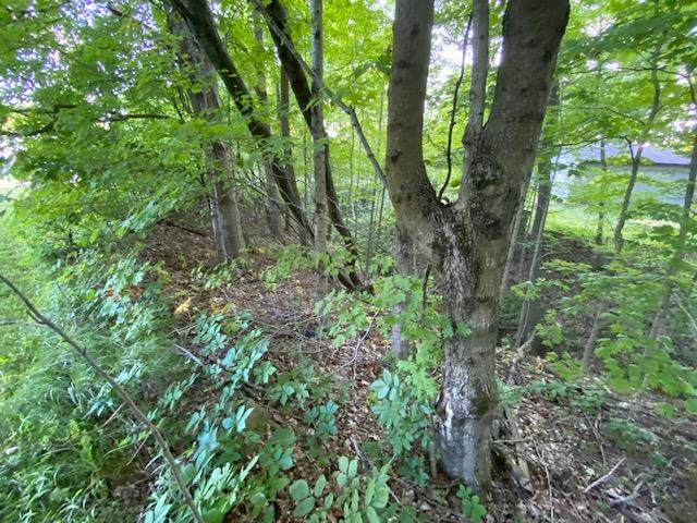 7326 State Route 19, Unit 1 Lot 172, mount gilead, OH 43338 (MLS #9047458) :: The Holden Agency