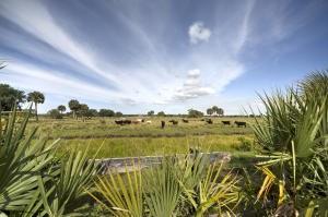 0 SW Hosanah Lane, Okeechobee, FL 34974 (#M20007815) :: The Haigh Group | Keller Williams Realty