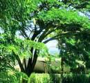 143 Hoowaiwai Loop - Photo 29