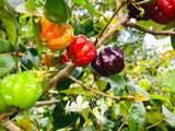 540 Kaiapa Pl - Photo 29