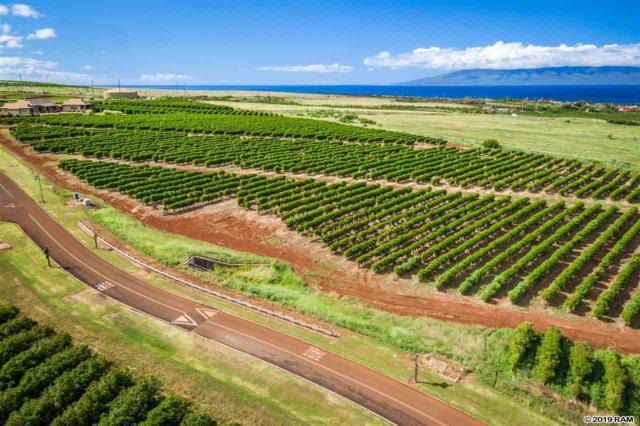 517 Oka Kope St, Lahaina, HI 96761 (MLS #382564) :: Maui Estates Group