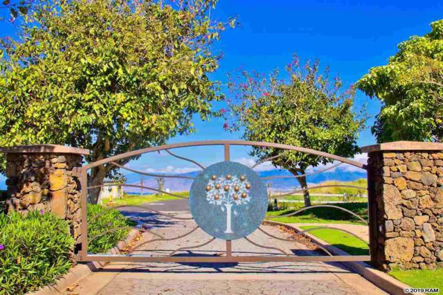 322 Huahua St Lot #19, Kula, HI 96790 (MLS #382905) :: Coldwell Banker Island Properties
