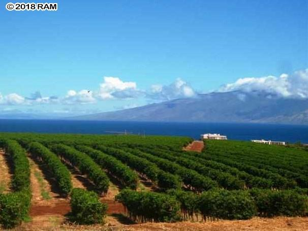901 Aina Mahi'ai St Lot 25, Lahaina, HI 96761 (MLS #377308) :: Elite Pacific Properties LLC