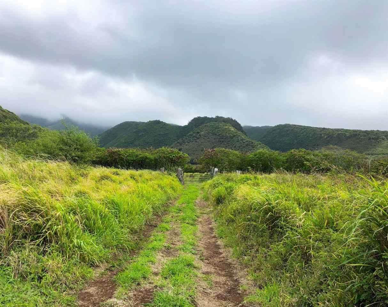 0 Kamehameha V Hwy - Photo 1