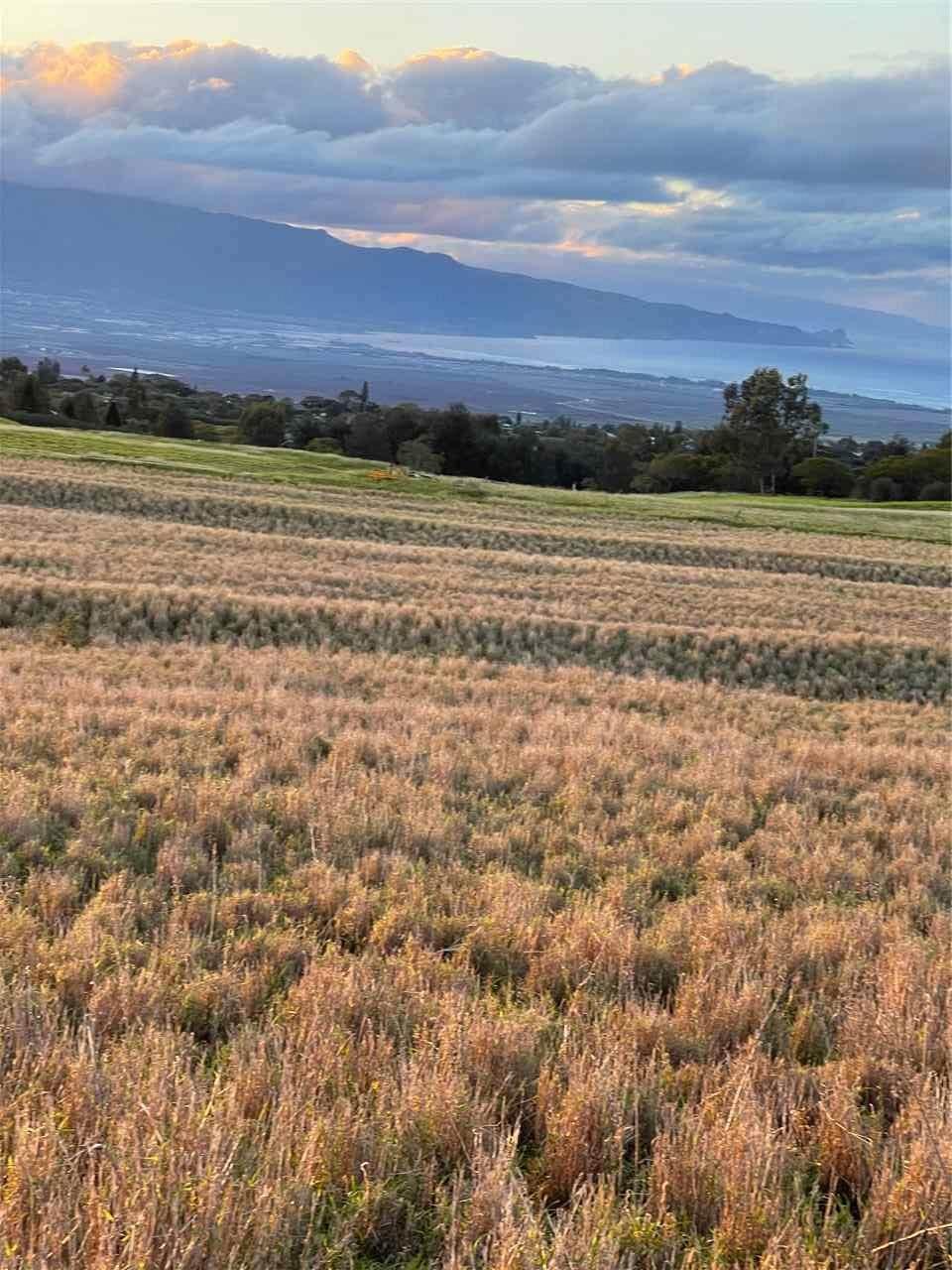 0 Haleakala Hwy - Photo 1