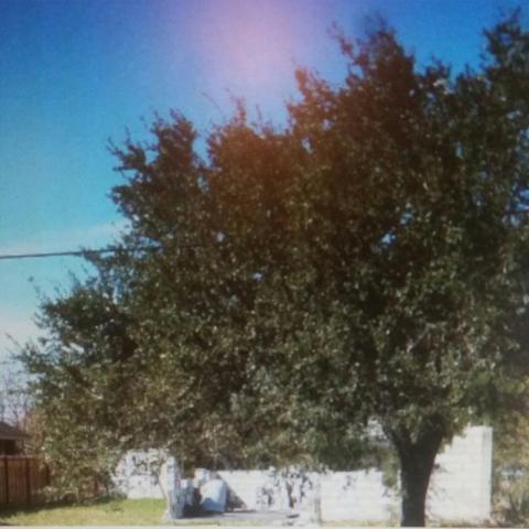 1720 W Corpus Christi Drive, Weslaco, TX 78596 (MLS #221873) :: Jinks Realty