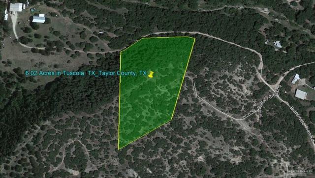 n/a Butternut Trail, Tuscola, TX 79562 (MLS #313476) :: The Ryan & Brian Real Estate Team