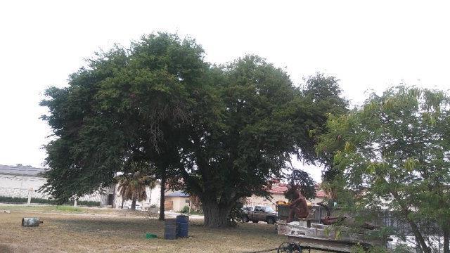 1401 8th Street, Mcallen, TX 78501 (MLS #207870) :: The Lucas Sanchez Real Estate Team