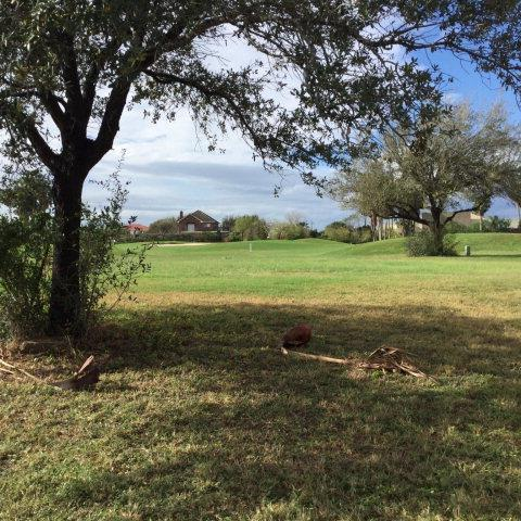 1501 S Tierra Bella Street S, Weslaco, TX 78596 (MLS #302769) :: The Ryan & Brian Real Estate Team