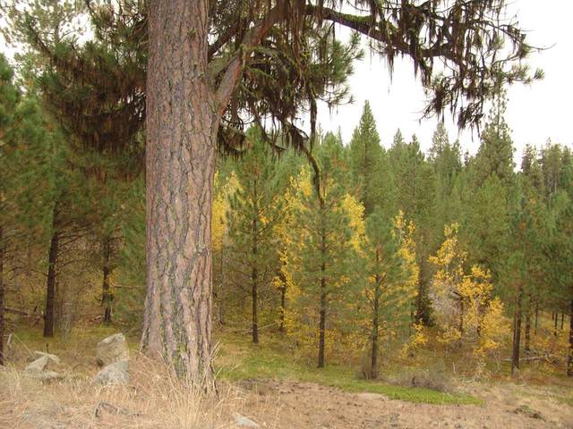 215 Pointes Road, Cascade, ID 83611 (MLS #531444) :: Boise River Realty