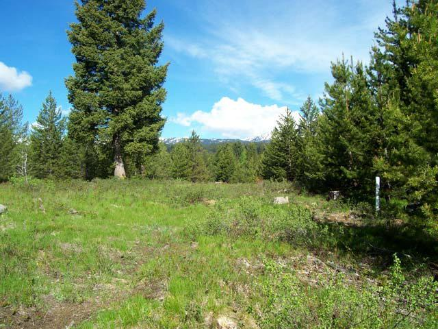 L7B2 Vaughn Drive, Cascade, ID 83611 (MLS #517572) :: Juniper Realty Group