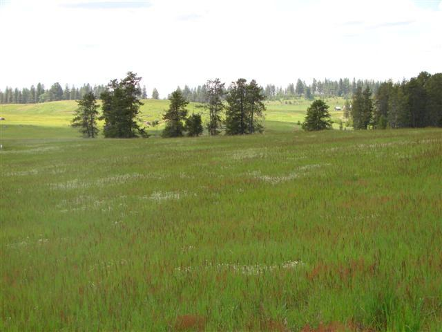 13751 Grouse Knoll Place, McCall, ID 83638 (MLS #521146) :: Juniper Realty Group
