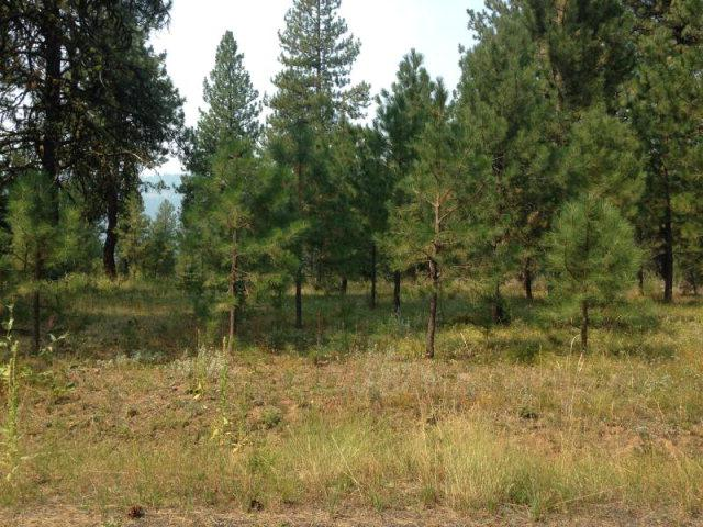 lot 19 Blackhawk Lake Drive, McCall, ID 83638 (MLS #523033) :: Juniper Realty Group