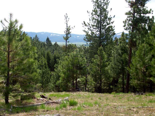 L20 B2 Coit Drive, Cascade, ID 83611 (MLS #523360) :: Juniper Realty Group