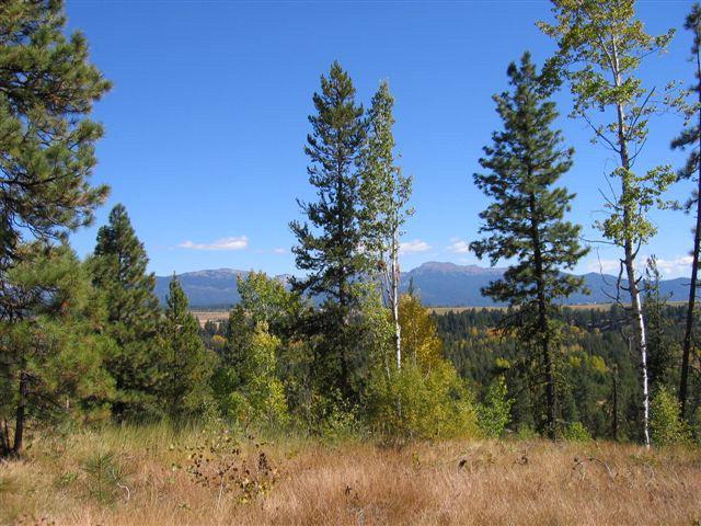 61 Sundance Drive, McCall, ID 83638 (MLS #523554) :: Juniper Realty Group
