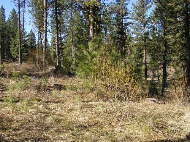 Lot 1 Short Line Drive, New Meadows, ID 83654 (MLS #524166) :: Juniper Realty Group