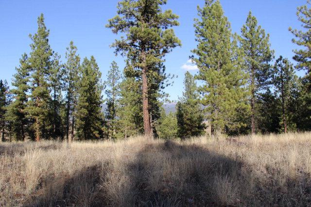 Lot 10 Timber Ridge Drive, New Meadows, ID 83654 (MLS #524167) :: Juniper Realty Group