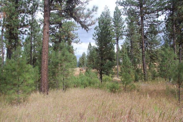 Lot 30 Timber Ridge Drive, New Meadows, ID 83654 (MLS #524176) :: Juniper Realty Group