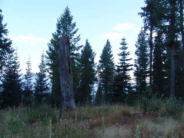 212 Tripod View Drive, Smith's Ferry, ID 83611 (MLS #524913) :: Juniper Realty Group