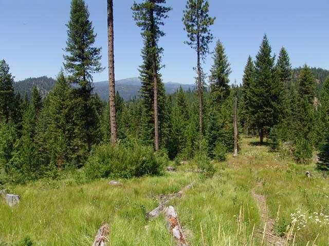 220 Tripod View Drive, Smith's Ferry, ID 83611 (MLS #524919) :: Juniper Realty Group