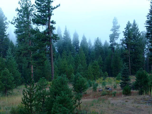 226 Tripod View Drive, Smith's Ferry, ID 83611 (MLS #524921) :: Juniper Realty Group