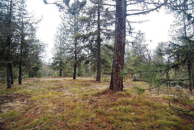 31 Fawnlilly Drive, McCall, ID 83638 (MLS #524978) :: Juniper Realty Group