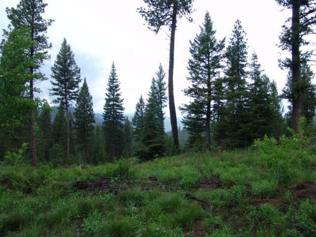 213 Tripod View Drive, Smith's Ferry, ID 83611 (MLS #525291) :: Juniper Realty Group