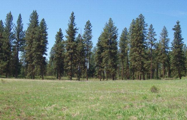 Lot 22 Timber Ridge Drive, New Meadows, ID 83654 (MLS #525302) :: Juniper Realty Group