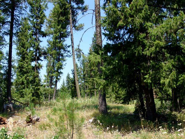 237 Upper Murray Creek Road, Smith's Ferry, ID 83611 (MLS #525361) :: Juniper Realty Group