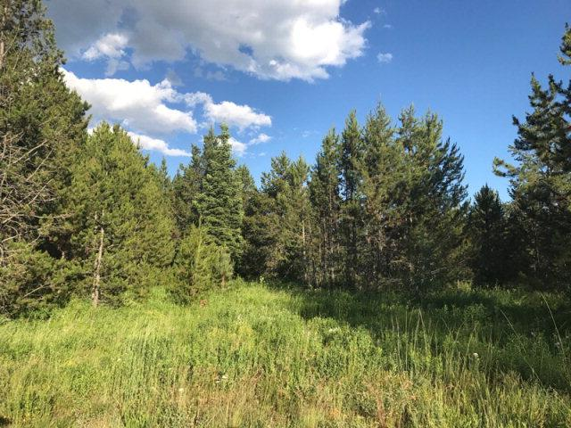 183 Wildwood Drive, Donnelly, ID 83615 (MLS #525676) :: Juniper Realty Group