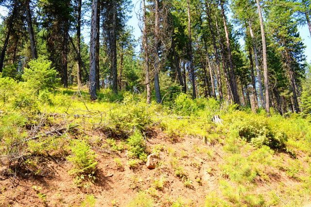 TBD Thistle Down Road, New Meadows, ID 83654 (MLS #525934) :: Juniper Realty Group