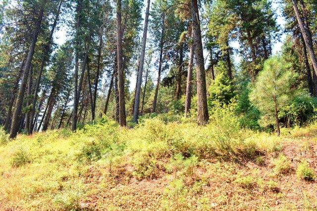 TBD Thistle Down Road, New Meadows, ID 83654 (MLS #525935) :: Juniper Realty Group