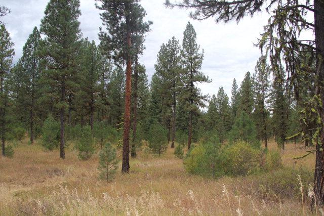Lot 9 Timber Ridge Drive, New Meadows, ID 83654 (MLS #526176) :: Juniper Realty Group