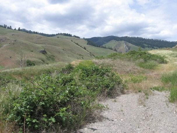 07 Shingle Creek Dr., Riggins, ID 83549 (MLS #526234) :: Juniper Realty Group