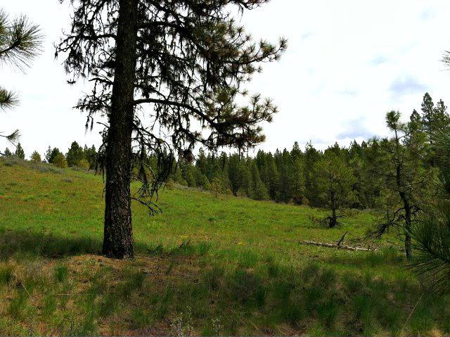 Lot 5 Van Dorn Drive, New Meadows, ID 83654 (MLS #526450) :: Juniper Realty Group
