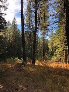 3 Jughandle Place, McCall, ID 83638 (MLS #528009) :: Juniper Realty Group