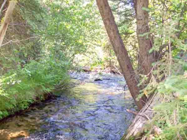 232 E Main Street, Warren, ID 83671 (MLS #525965) :: Boise River Realty