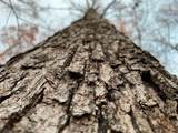 00 Roundtree & Mifflin Rd - Photo 3